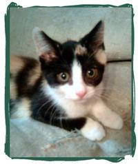 kitten rescue and adoption
