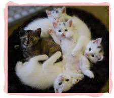 You'll find kitties like these at our adoption fairs