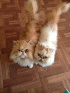 Oscar (left) and Otis (right) before surgery