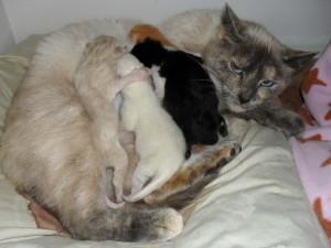Lexi & kittens