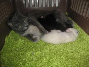 Nikita and babies 004