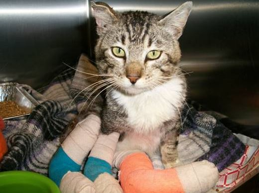 Ziggy at vet with three legs bandaged
