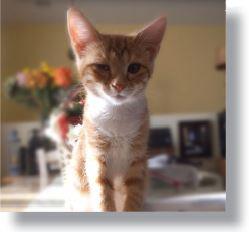 Merida, a touching MeoowzResQ adoption story