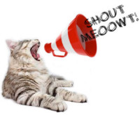 shout meoowt
