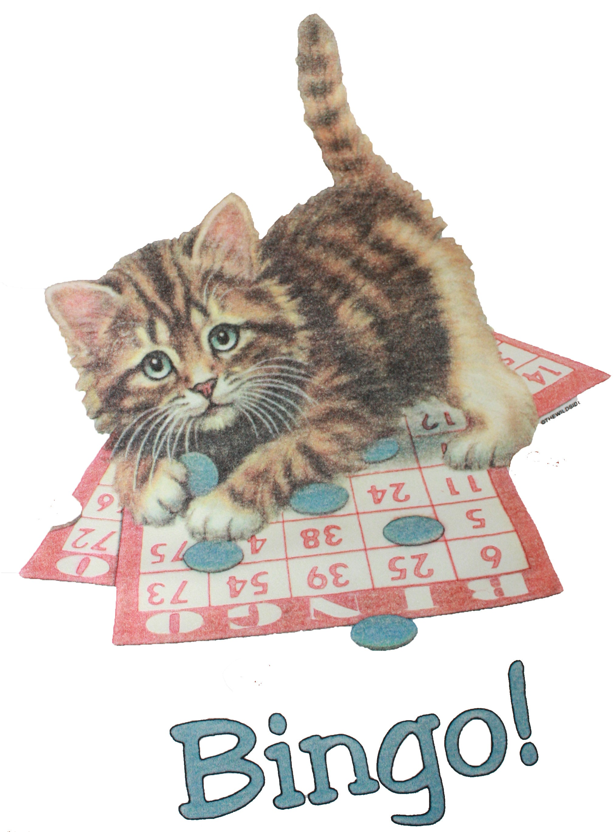 kitten-bingo-t-shirt_2