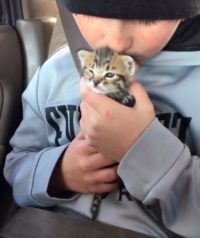 10-year-old Boy Calms Crying Abandoned Kitten and Finds Her a New Cat Mom