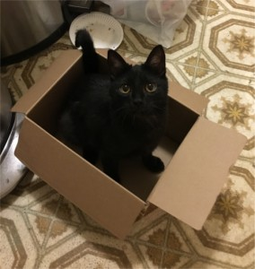 Black in a Box